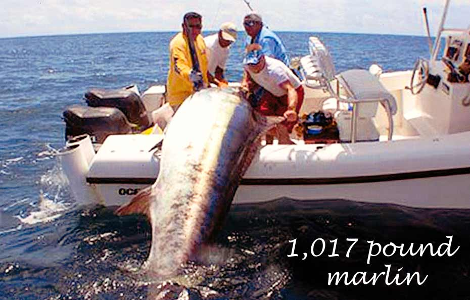 1,017 pound marlin caught on Ocean Master 27 center console boat